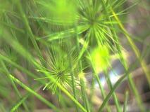 Waterplant Hintergrund der Unschärfe Stockbild