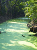 Waterplant och flod Arkivbilder