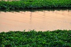 Waterplant som växer på flodyttersidan med vattensikt på skymningtid arkivbild