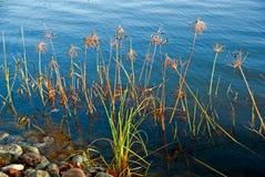 Waterplanten royalty-vrije stock afbeeldingen