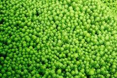Waterplanten Stock Foto