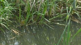 Waterplanten dichtbij Kust stock video