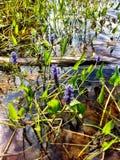 Waterplanten, logboek, bloemen Royalty-vrije Stock Foto's