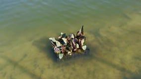 Waterplanten op thermisch meer stock videobeelden