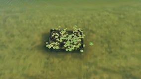 Waterplanten op thermisch meer stock video