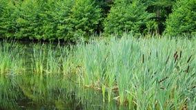 Waterplants Στοκ εικόνα με δικαίωμα ελεύθερης χρήσης