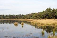 Waterplas in Het Gooi, Lake in Het Gooi royalty free stock photos
