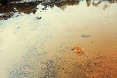 Waterplons in de vulklei Stock Foto