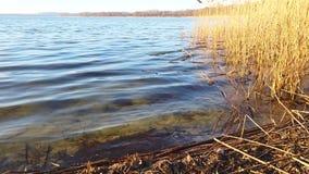 Waterplonsen op de kust van het meer stock video