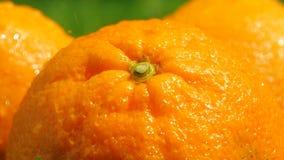 Waterplonsen op rijpe sinaasappelen, langzaam motie macroschot stock video