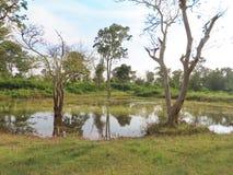 Waterpoel in Bandipur royalty-vrije stock afbeeldingen