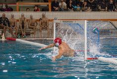 Waterpolo player - goalkeeper royalty free stock photo