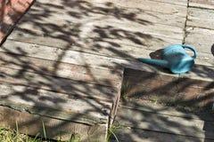 Waterpot del bebé en la terraza Fotografía de archivo