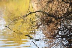 Waterreflects Στοκ Εικόνες
