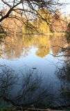 Waterreflects Στοκ εικόνες με δικαίωμα ελεύθερης χρήσης