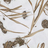 Waterriet en de camouflage van het sneeuwpatroon voor eendjager Stock Foto