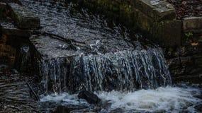 Waterrivier stock foto's