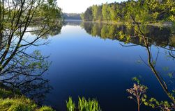 Waters of a calm lake in the early morning in the forest.  Stock Image