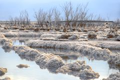 The waters of the Dead Sea between the salt formations with trees on them at sunrise. Seascape stock images