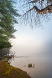 Waters edge in early morning fog on a lake near Ottawa, Ontario. Royalty Free Stock Photography