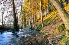 Waters of fast river running through spring forest lit by golden royalty free stock photo