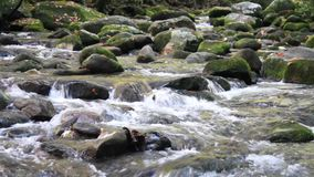 Waters Of Roaring Fork Motor Trail In The Smoky Mountains stock video