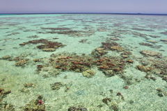 Waters of tropical reefs Stock Image