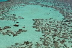 Waters of tropical reefs Stock Photography
