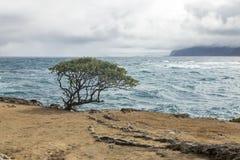 waterscape Fotografía de archivo libre de regalías