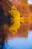 Waterscape de lac autumn avec des canards Photographie stock