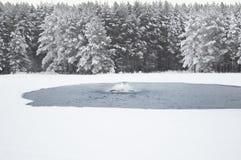 Waterscape dos invernos Fotos de Stock Royalty Free