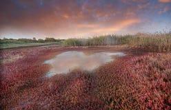Waterscape longo da exposição Imagens de Stock Royalty Free