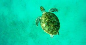 Waterschildpad die in het overzees zwemmen Royalty-vrije Stock Foto