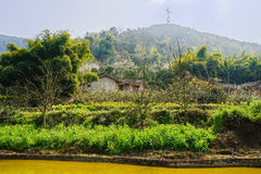 Waterside farmhouses on verdant mountainside at sunny spring noo Royalty Free Stock Images