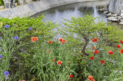 Waterside flower plants Royalty Free Stock Photography