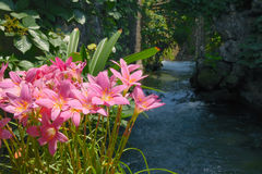 Waterside flowers Royalty Free Stock Photo