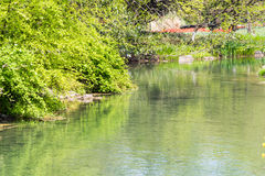 Waterside green bush and glass Royalty Free Stock Images