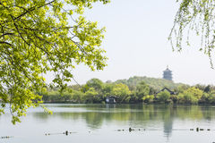 Waterside green tree and Leifeng Pagoda royalty free stock photos