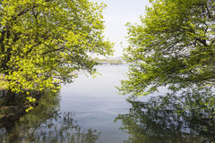 Waterside green tree stock photography