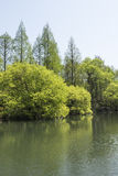 Waterside green trees royalty free stock photography
