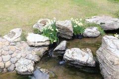 Waterside narcissus Stock Photo