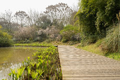 Waterside planked pavement in blossoming spring Royalty Free Stock Photo