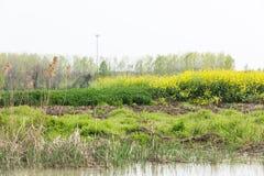 waterside rape flower Stock Photo