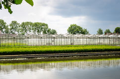 Waterside Row of Greenhouses Royalty Free Stock Photos