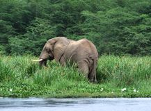 Waterside scenery with Elephant Royalty Free Stock Images