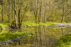 Waterside scenery at spring time Royalty Free Stock Photo