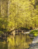 Waterside scenery at spring time Royalty Free Stock Image
