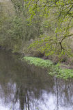Waterside with spring growth Royalty Free Stock Photo
