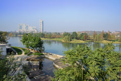 Waterside trees and plants in sunny winter morning. Chengdu,China Royalty Free Stock Photos