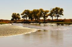Waterside trees Stock Image